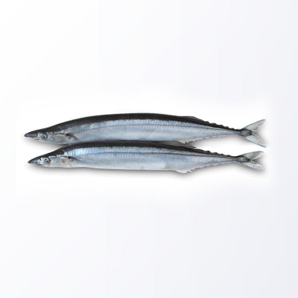 MAC173-Mackerel-Pike.jpg