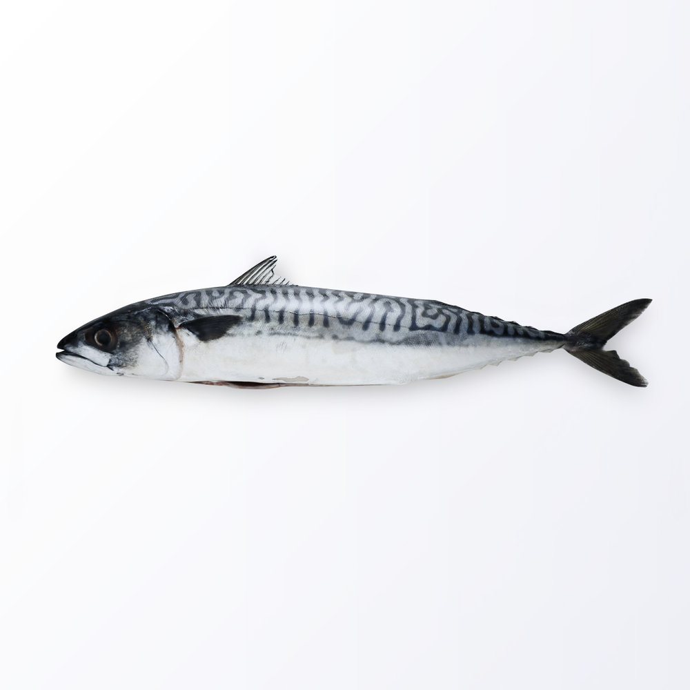 MAC122-Mackerel-Saba.jpg