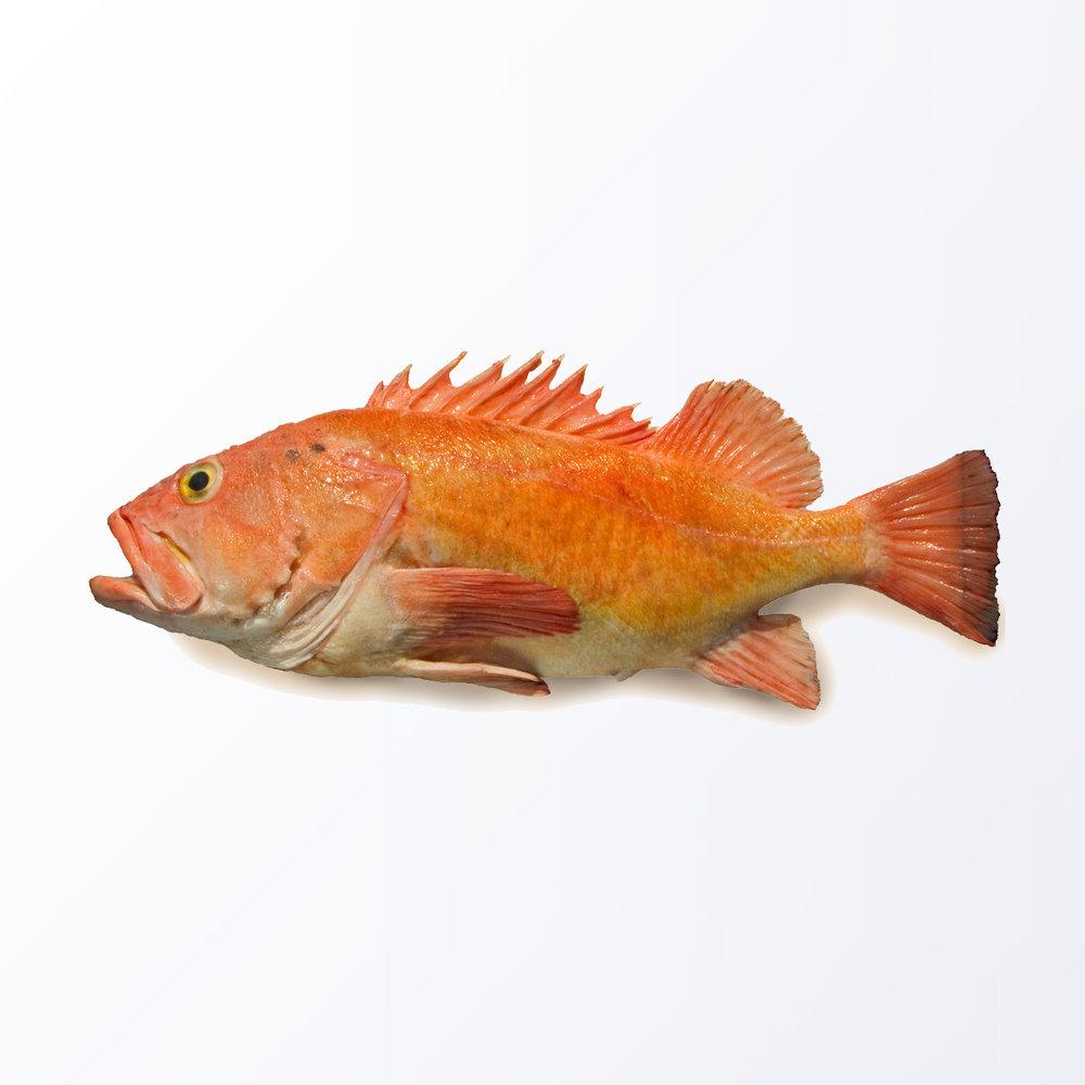 YEE101-Rockfish-Yelloweye.jpg