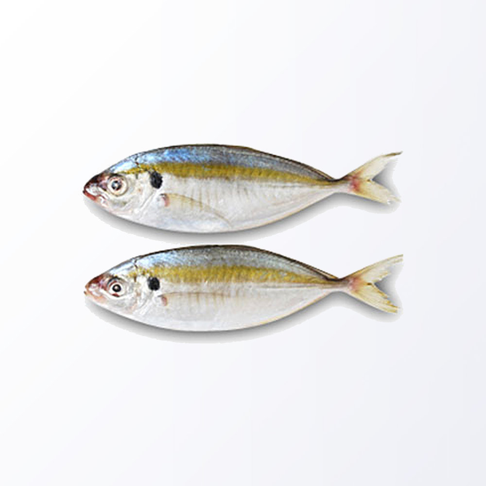 TRE102-Trevally-Yellow.jpg