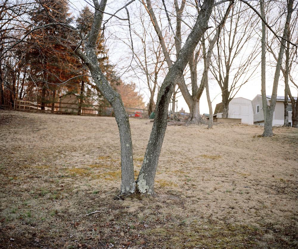 7-v tree 2(13x19ERB)(flattened).jpg