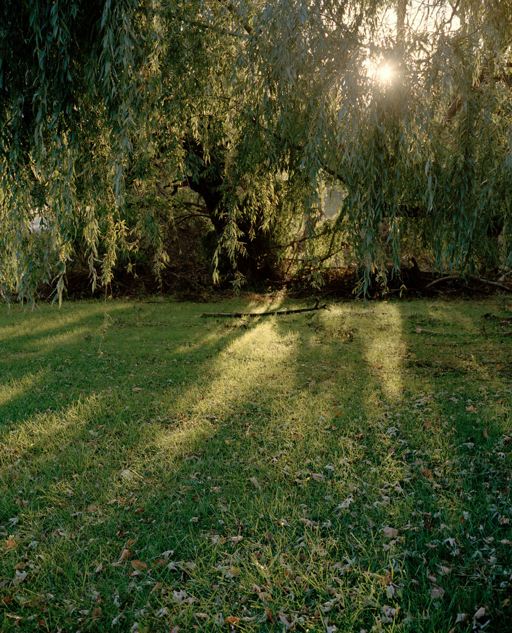 21-underneath the willow 2.jpg