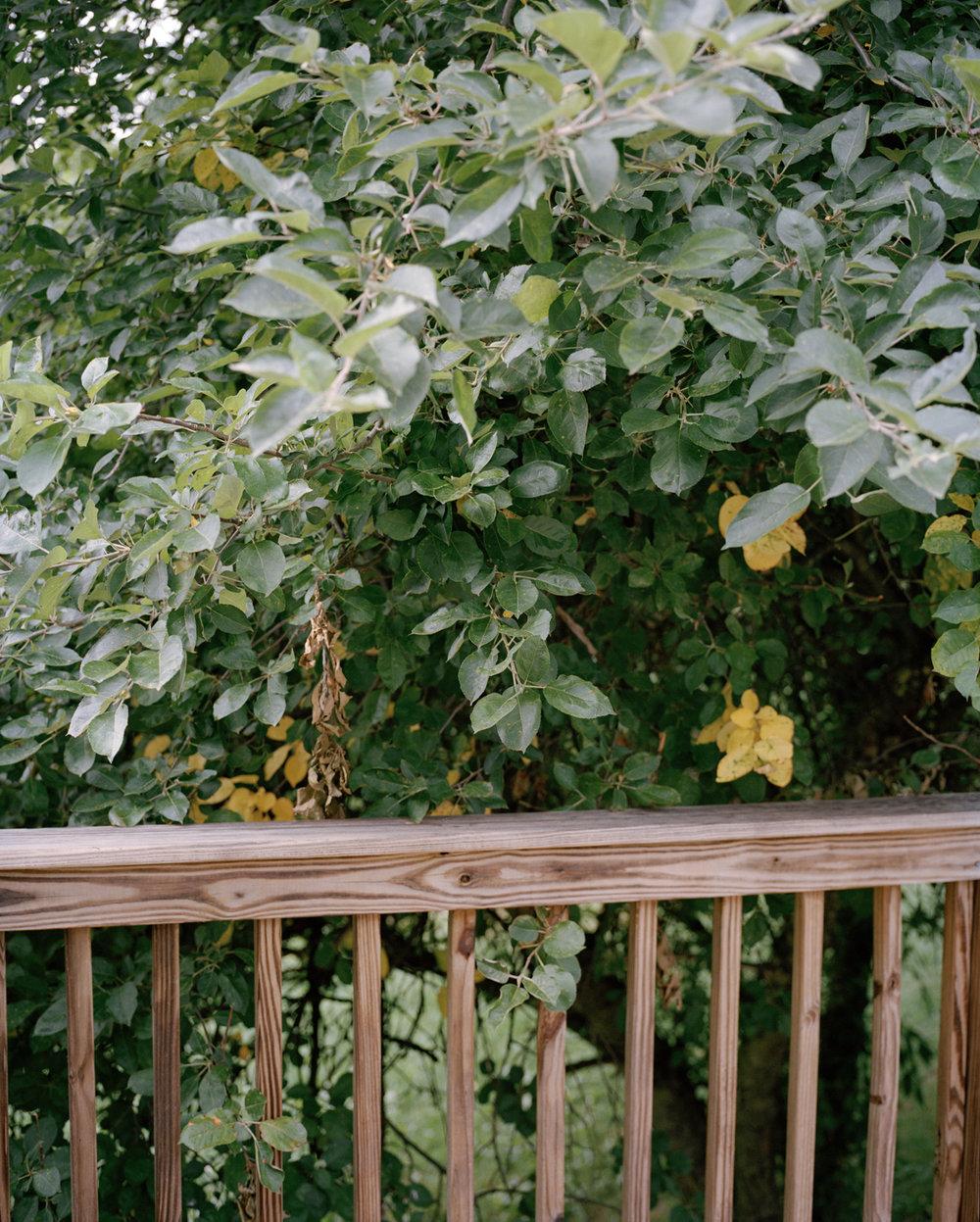 29-deck trees()1.jpg