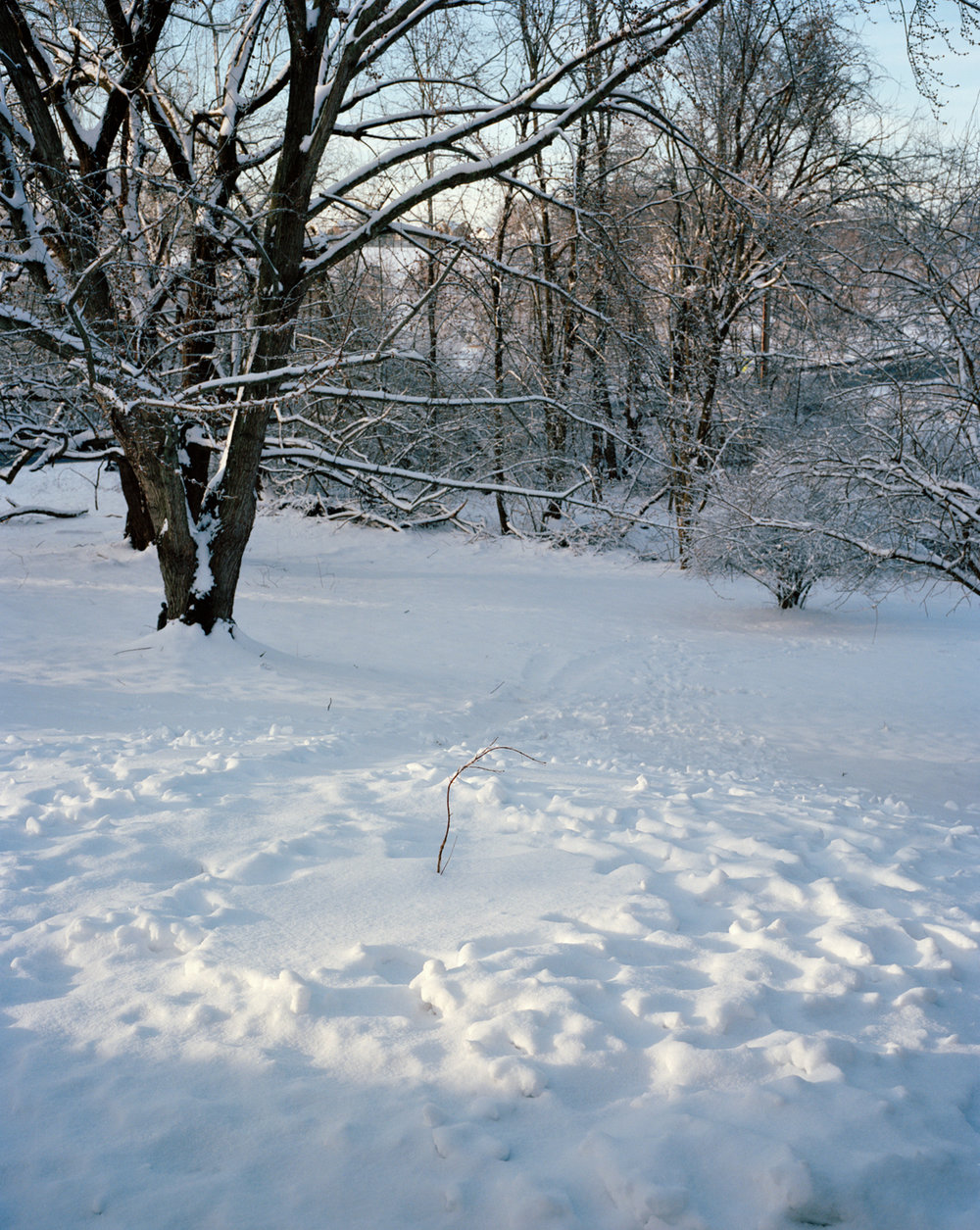 36-Little Tree in Snow.jpg
