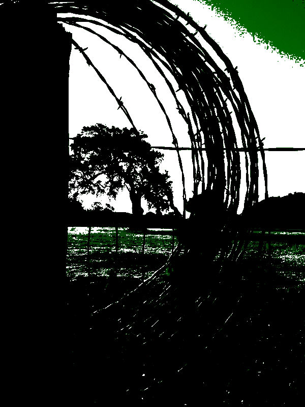 oak-tree-in-barbed-wire-art1.jpg