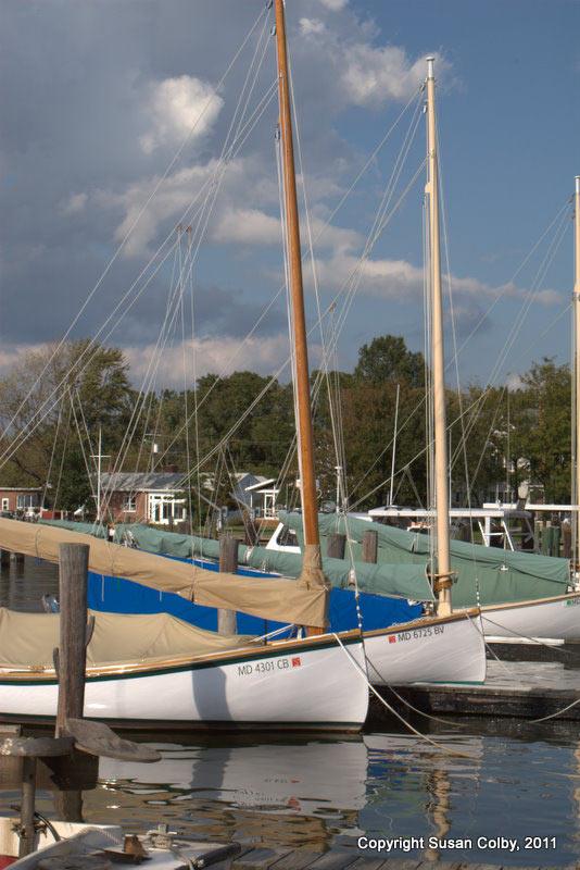 catboats1.jpg