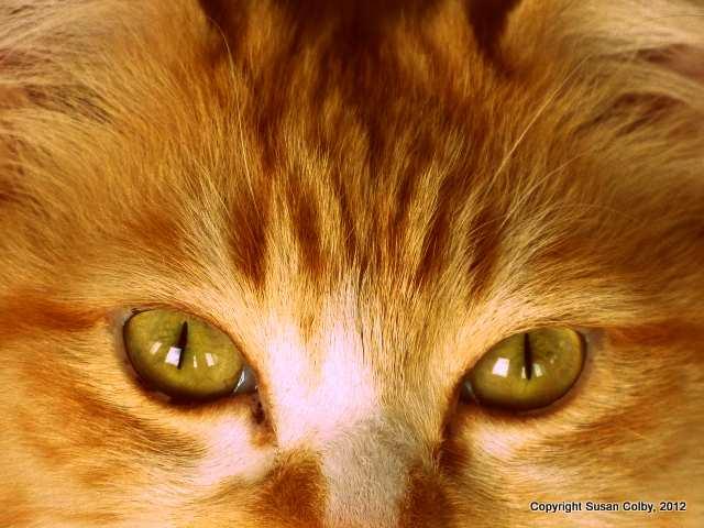 Buddy eyes