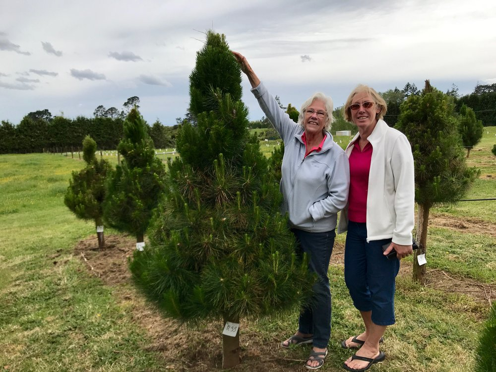 Getting the Christmas tree in New Zealand with Jenni