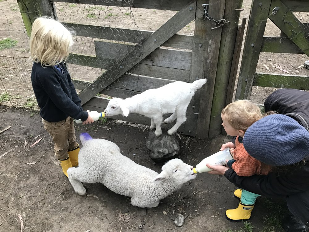 ^^^ Baby goat and sheep feeding at Airbnb in Kaikoura