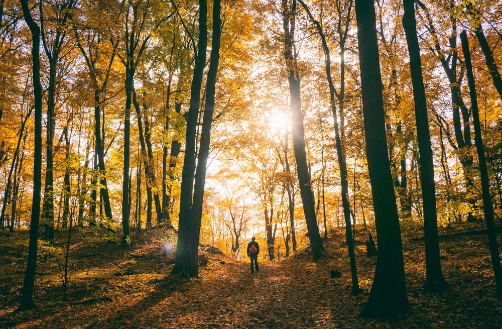 Hiker walking down wooded trail in the autumn, sun beaming through trees