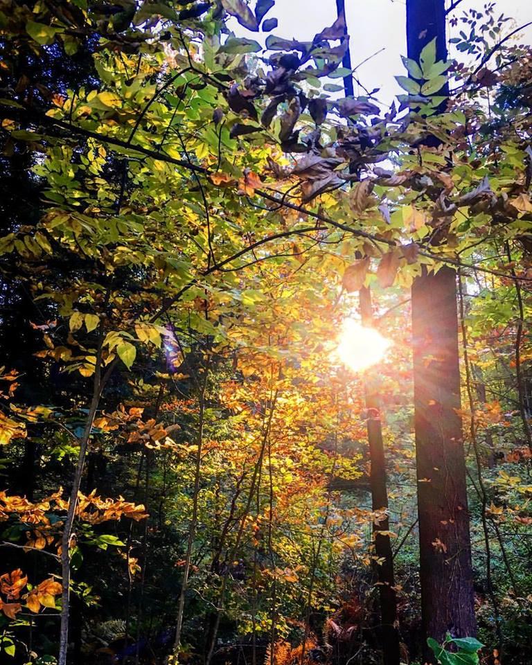 treessun.jpg