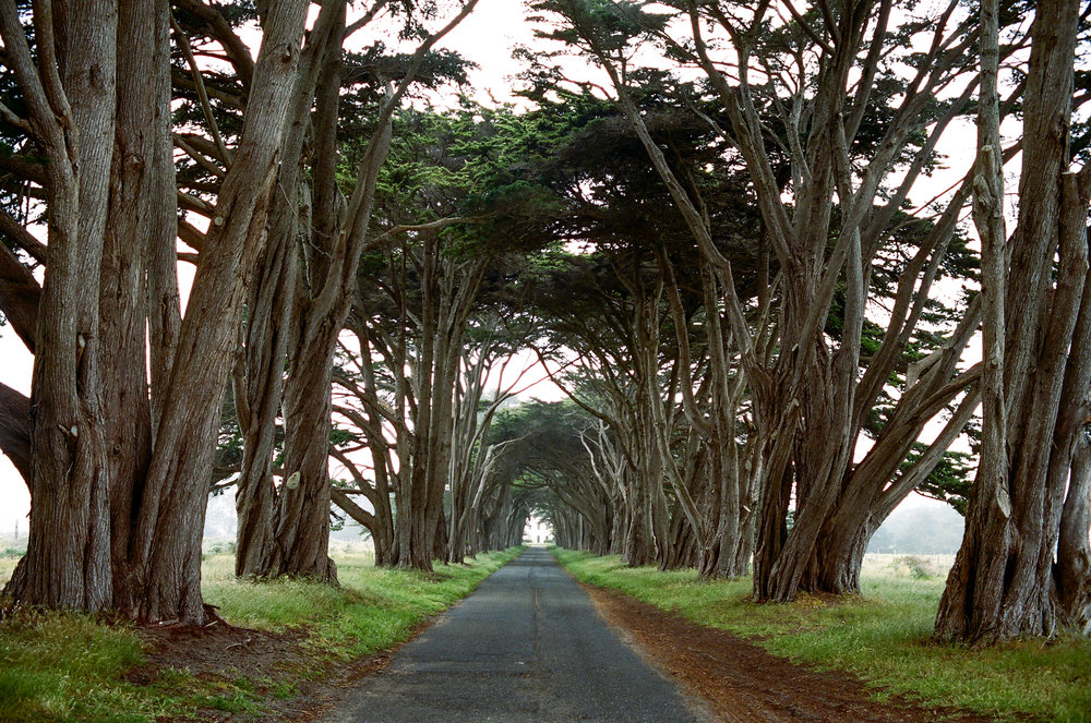 Lost Coast_Film_ 3481-3.jpg