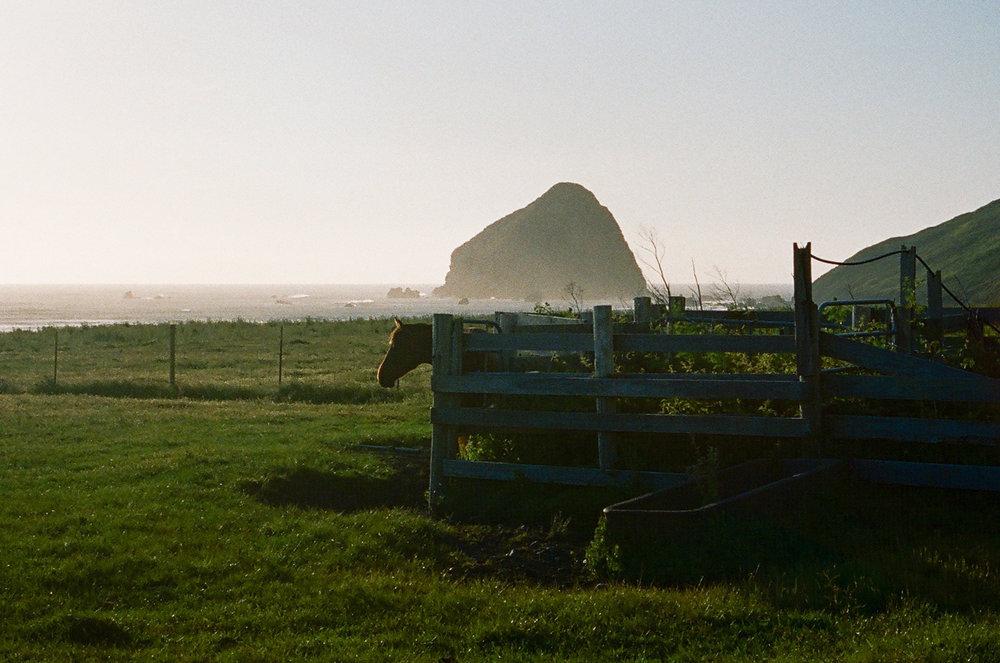 Lost Coast_Film_ 3481-19.jpg