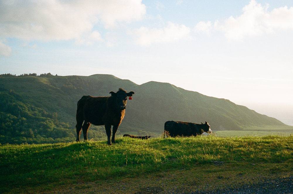 Lost Coast_Film_ 3481-24.jpg