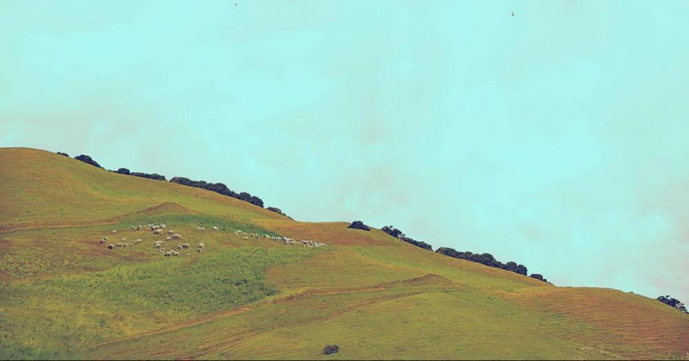 Sheep Hill      -