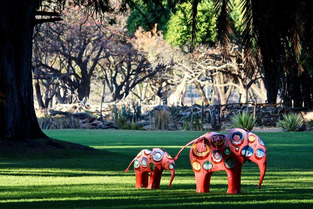 Elephants by John Kotze