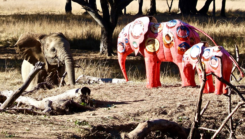 Moyo curious about the first painted elephants!