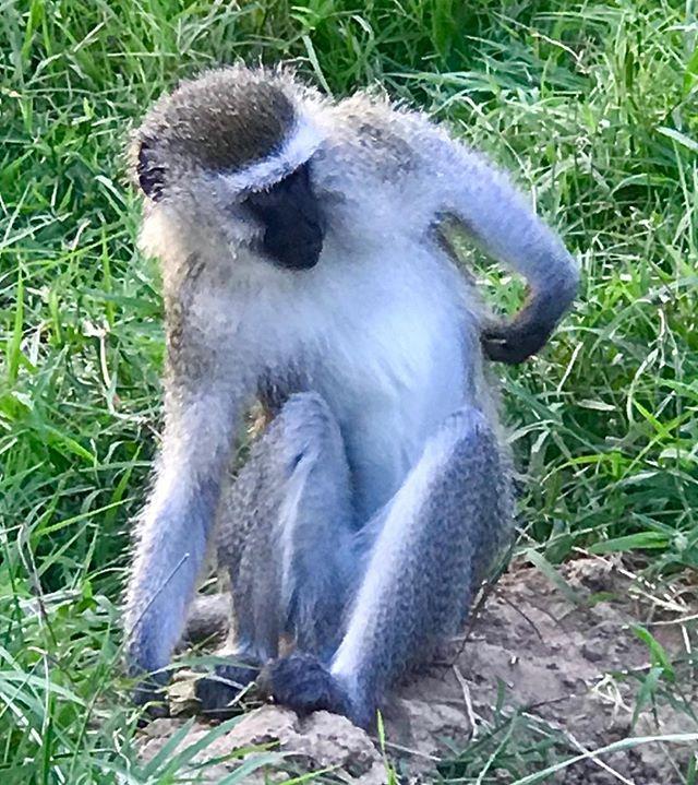 Itchy itchy! #hardtoreach #orphan #vervet #zen