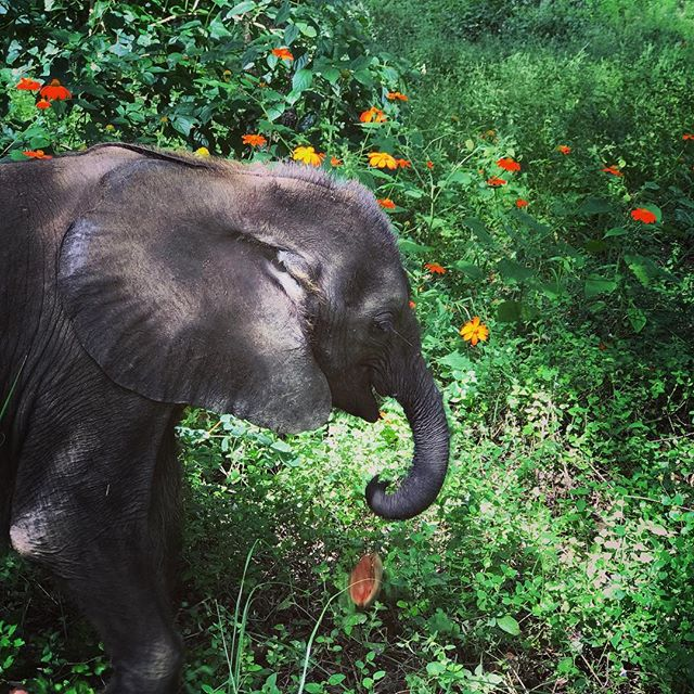 #mollystrong .... stop and smell the flowers!  #onebyone #everylifematters #rescued  #action4ifaw #ZEN