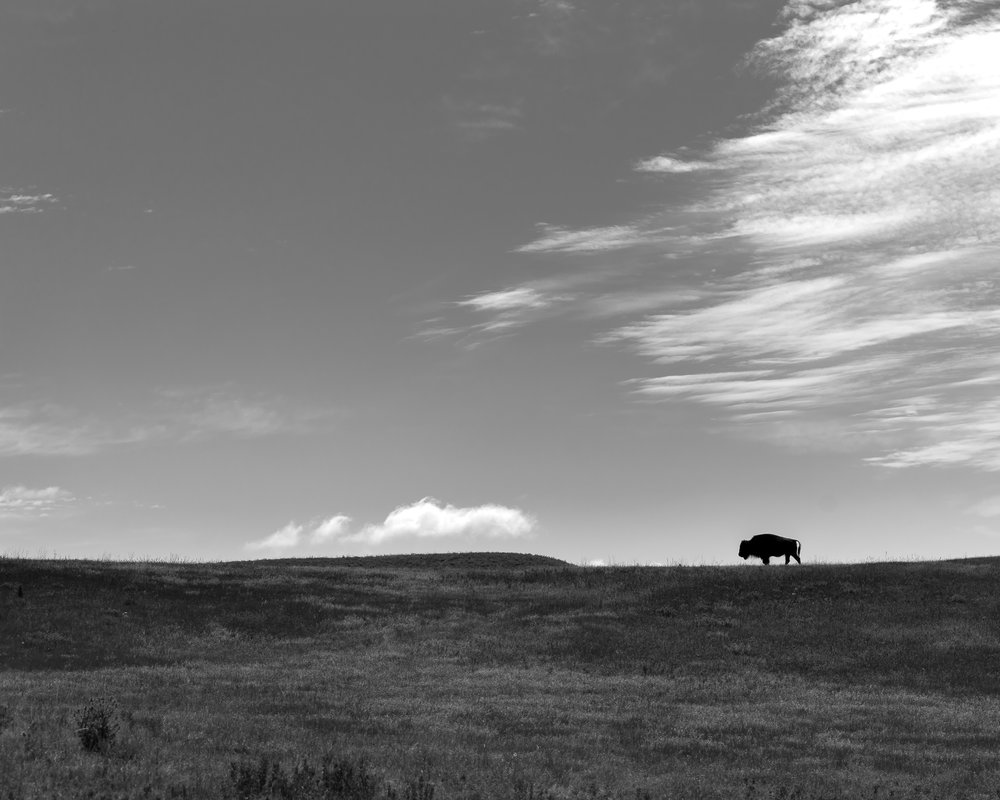A Long Day, Custer State Park, Black Hills, S.D.