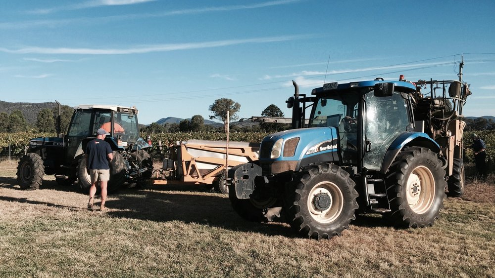 Vineyard Harvest in Central NSW