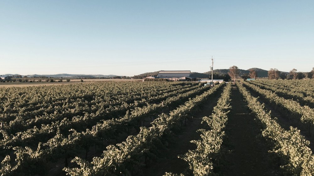 Vineyard in Central NSW