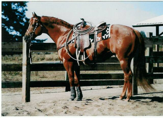 AnyOldTimeX - a beautiful, athletic stallion owned by Lazy 3 Quarter Horses who is by Calyx.
