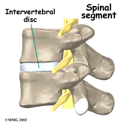 Plump up Your Spinal Discs! — Marie Pasinski MD