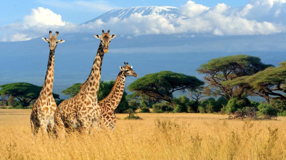 TEXTILES - KENYA
