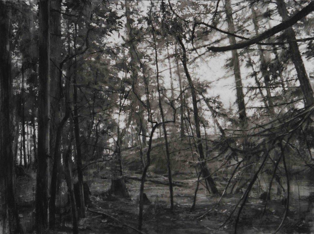 Woods; Lopez Island