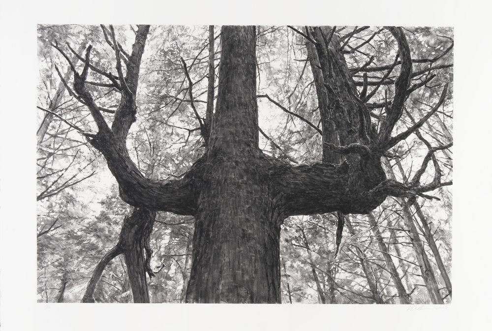 MKa18-12 TreeNearSecondBeachIII.jpg