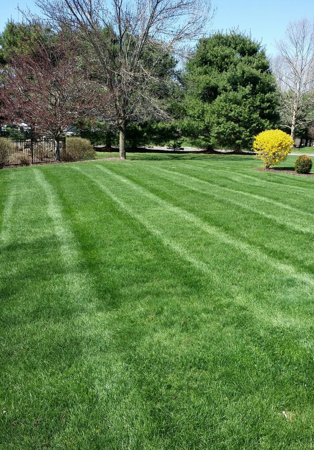 LAWN MAINTENANCE -  Shevlin Landscape Services approaches lawn maintenance as a low intensive, systemic program; focusing on and specializing in creating a healthy growing environment for which the turf can thrive.  Offering mowing services, dethatching, aerating, custom fertilization programs, and overseeding.