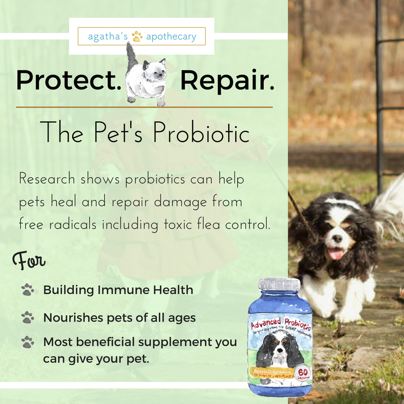 dog probiotic