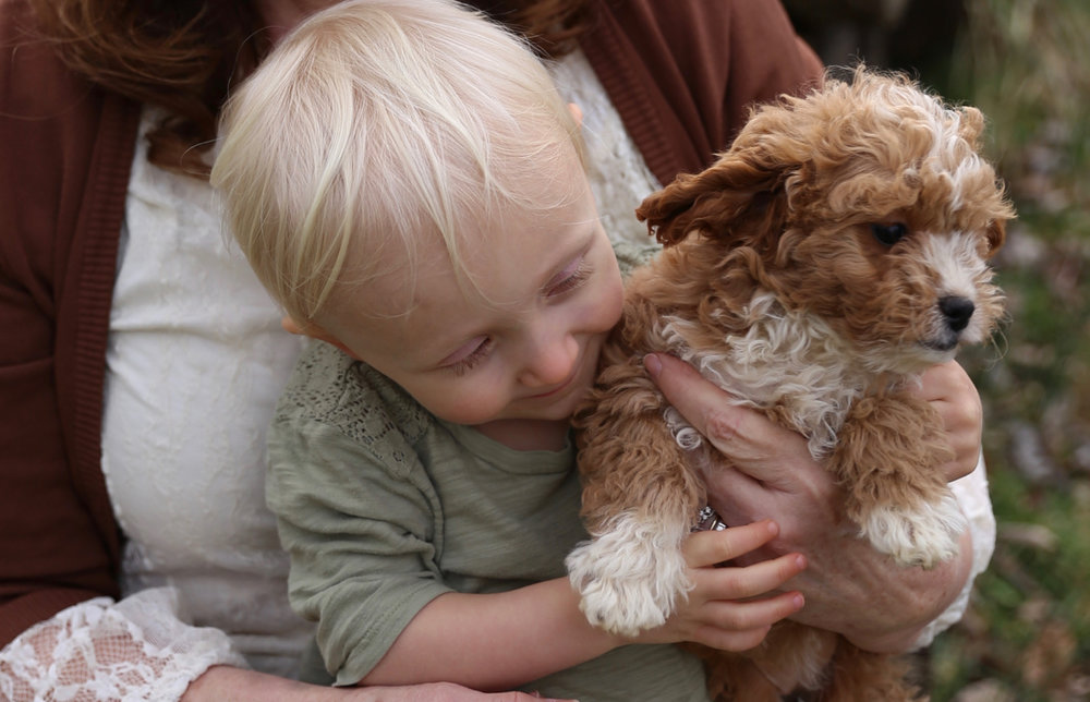 Natural Flea Control Article Puppy Children Safe Flea Control