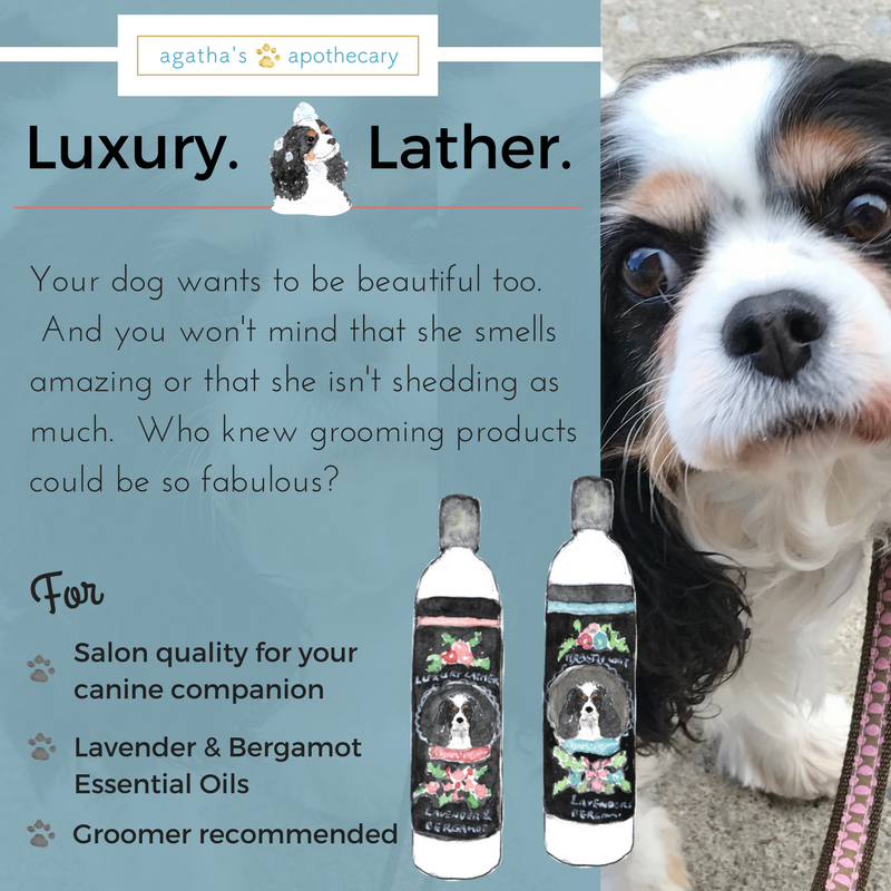 Agatha's Apothecary Luxury Lather Shampoo & Healthy Coat Conditioner