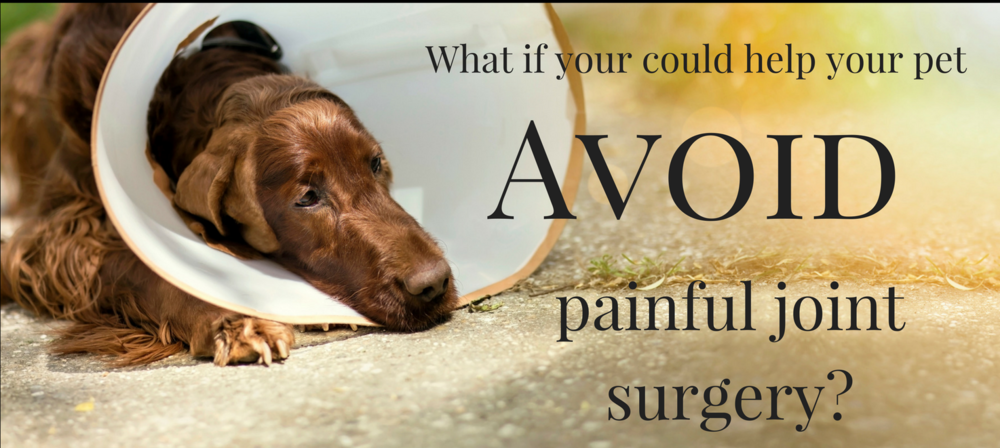 Dog Joint Disease Help
