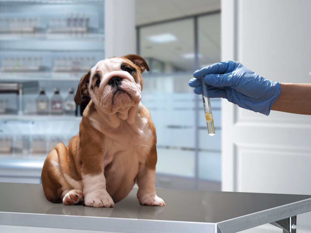 Problems with vaccinations in puppy