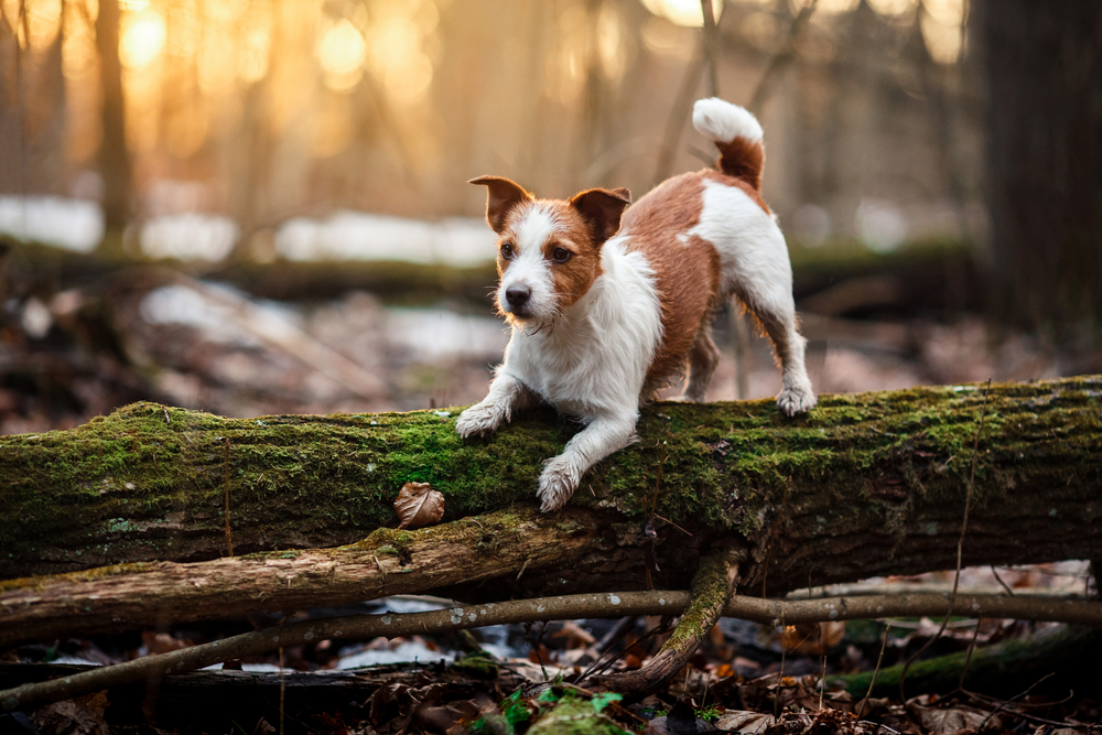 Probiotics for dog ear problems