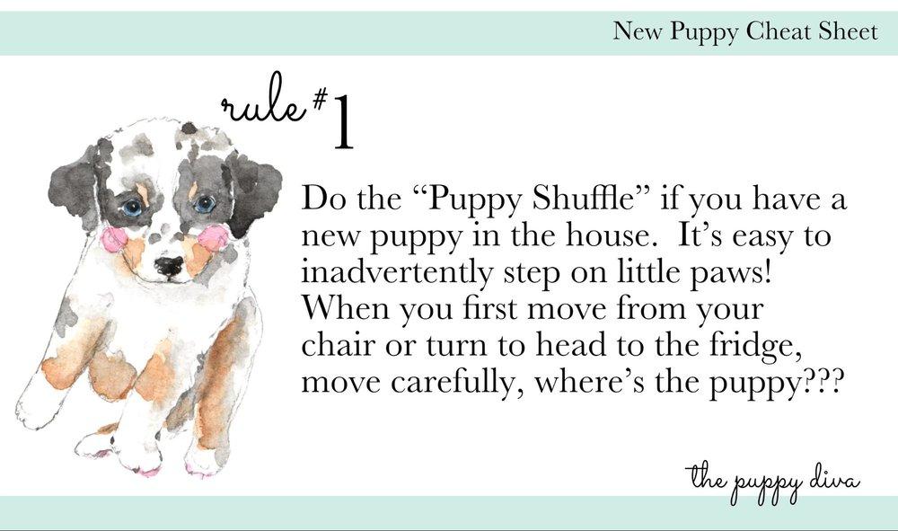 Puppy Tips.jpg