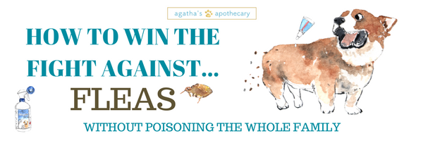 HOW TO WIN THE FIGHT AGAINST FLEAS NATURALLY