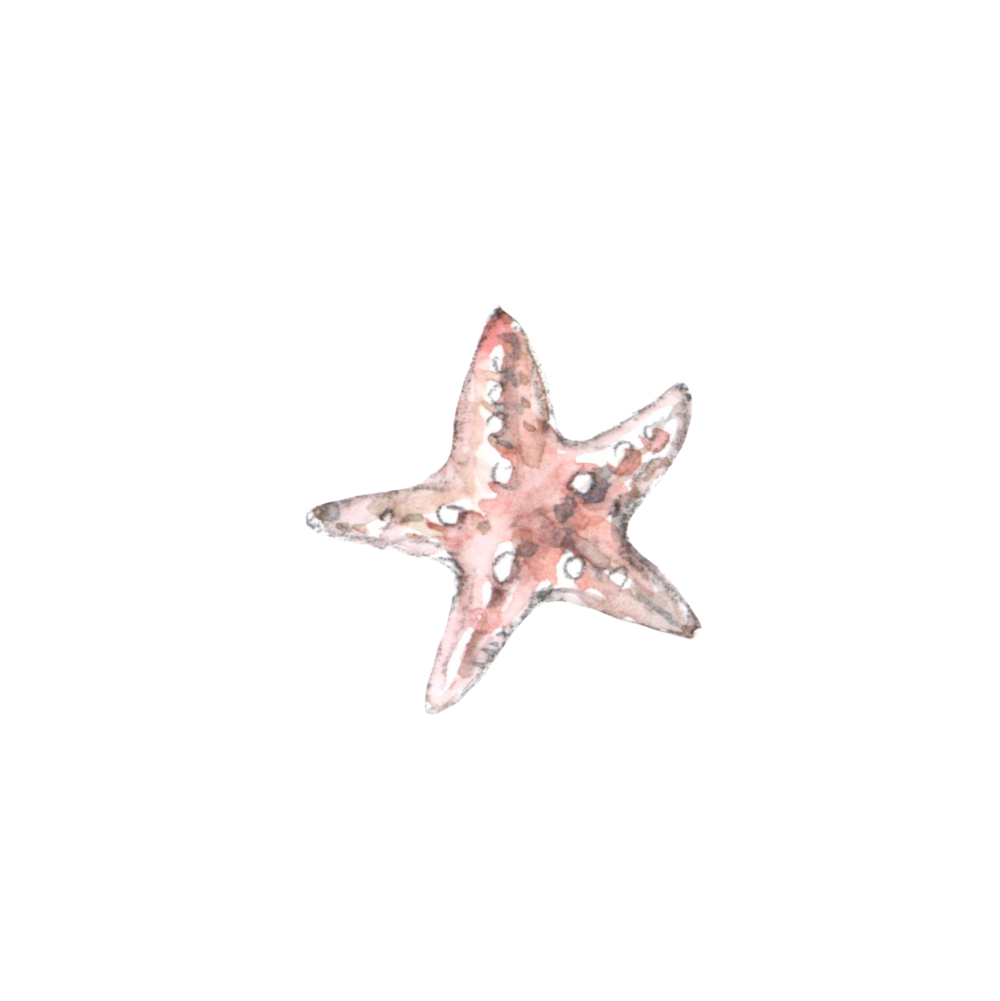 Starfish watercolor