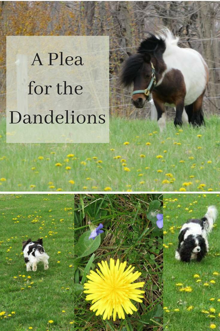 A Pleaforthe Dandelions.png