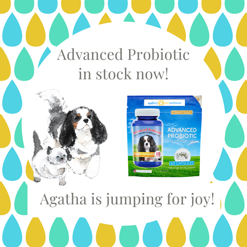 Agatha's Pet Wellness Advanced Probiotic