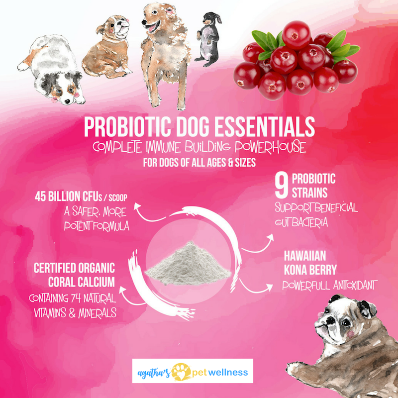 Probiotic Dog Essentials offers 45 Billion CFUs PER SERVING, a number no chewable dog probiotic can match!