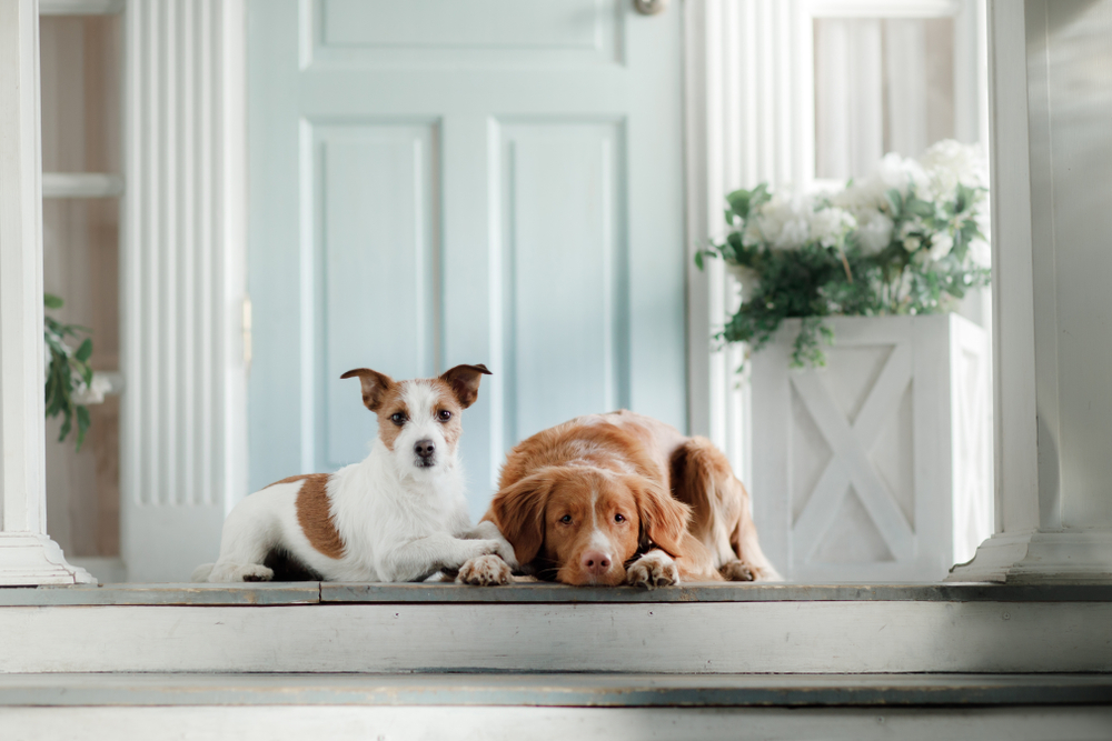 If your dog has skin problems, a therapeutic grade probiotic can often work wonders in restoring his system to normal.