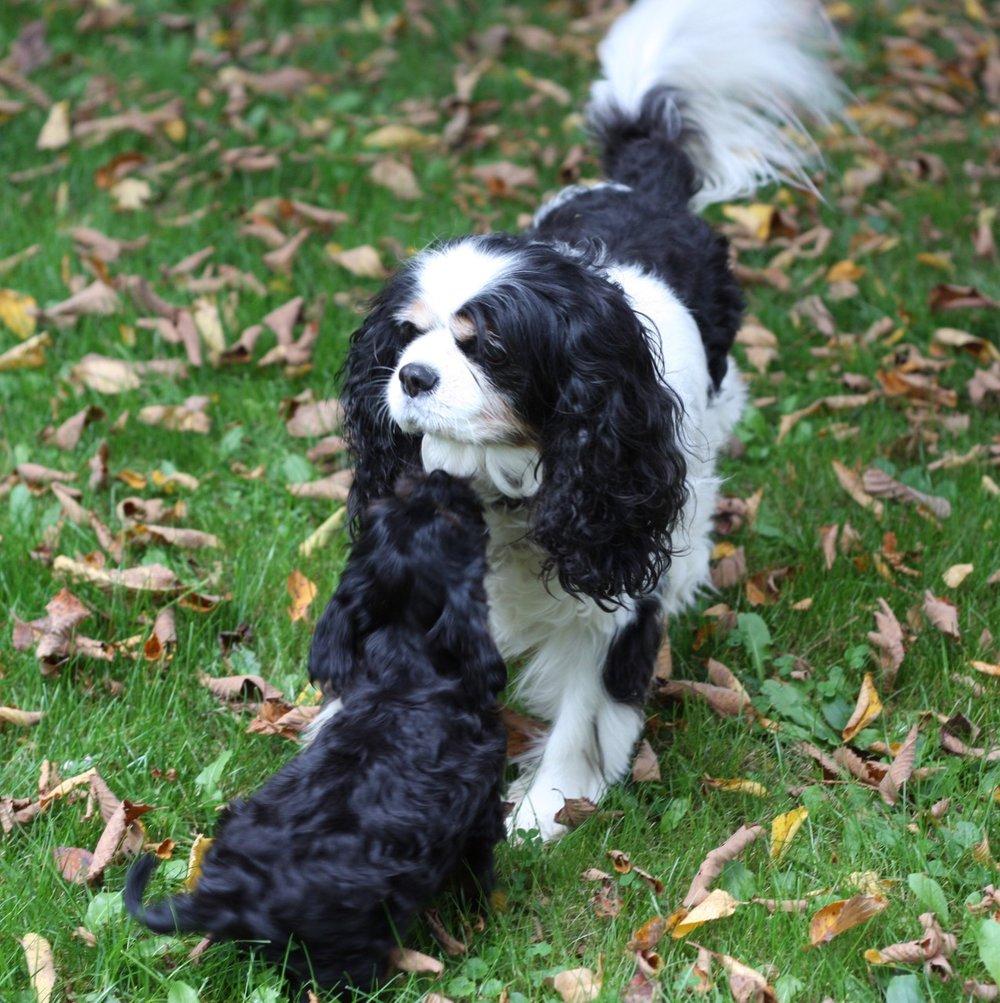 Agatha the doggie CEO of Agatha's Pet Wellness.jpg