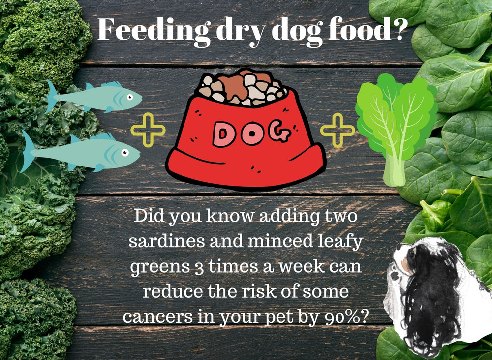 Simple changes to your dog's diet can help your pet fight illness and disease naturally.
