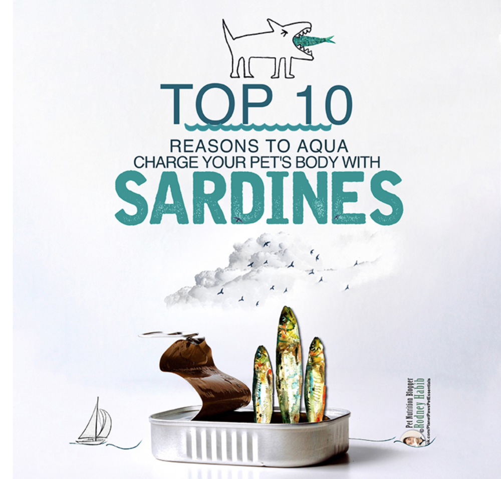 Should you give your pet sardines? Why it's worth getting past the smell.