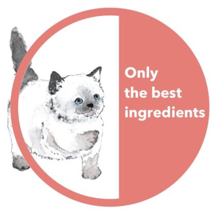 Best+Ingredients+graphic+with+kitten