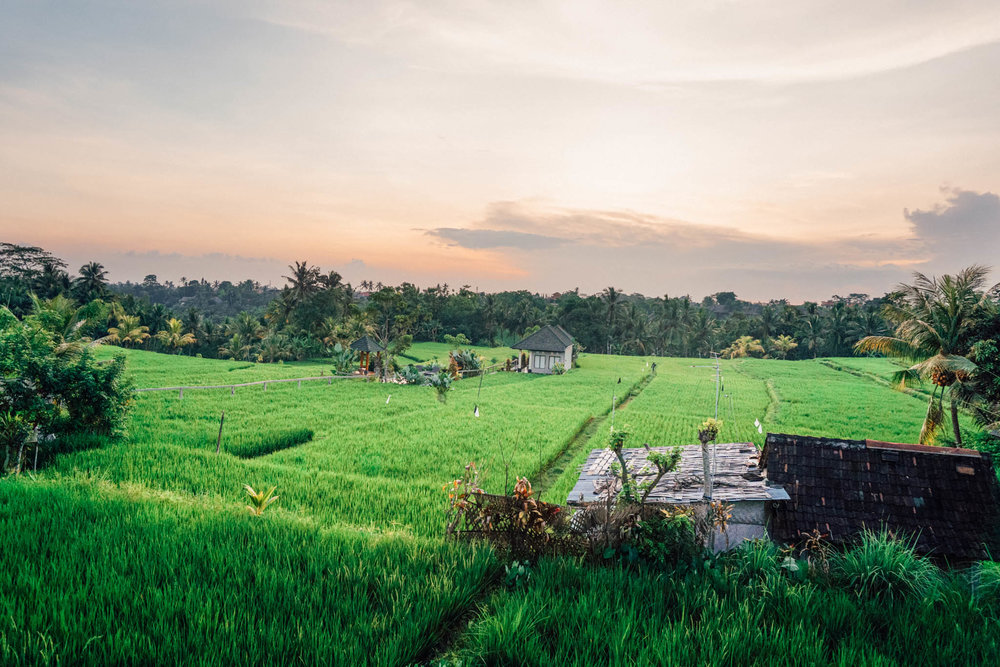 Dinner with an amazing view, overlooking Ubud's rice fields